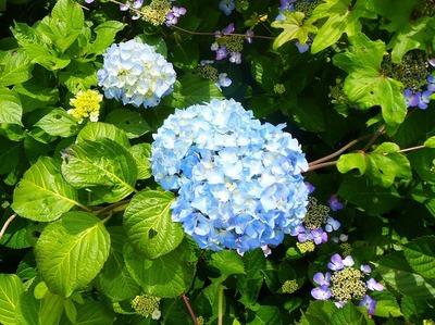 青海島・紫陽花の沢6.jpg