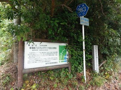 青海島八王子山タチバナ自生北限地案内板.jpg