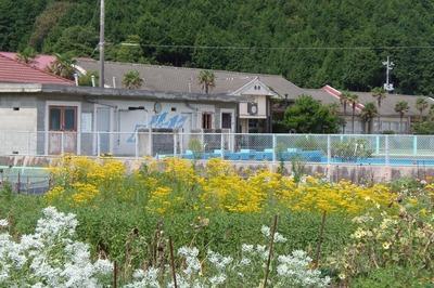 青海島共和国と季節の花.jpg