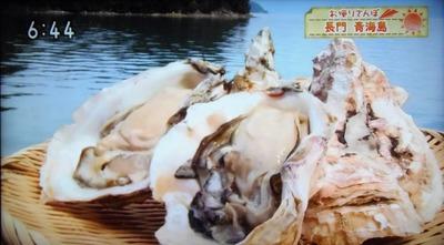 青海島岩がき.jpg