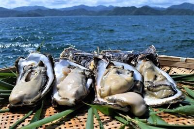 青海島岩牡蠣.jpg