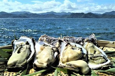 青海島岩牡蠣1.jpg