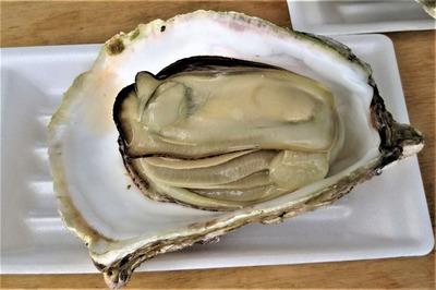 青海島岩牡蠣2.jpg