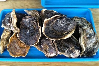 青海島産岩がき1.jpg