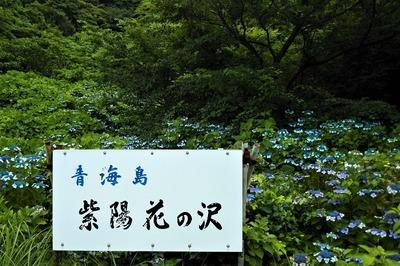 青海島紫陽花の沢1.jpg