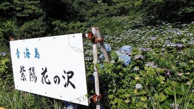 青海島紫陽花の沢4.jpg