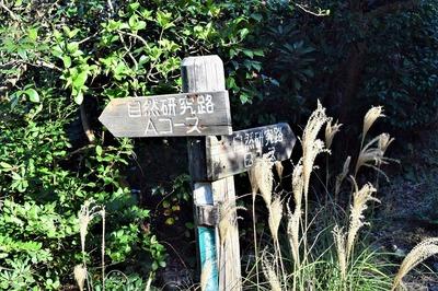 青海島自然研究路・コースの道標.jpg
