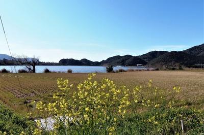 青海湖と季節の花8.3.15.jpg