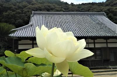 青蓮3.jpg