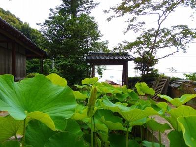 青蓮と山門.jpg
