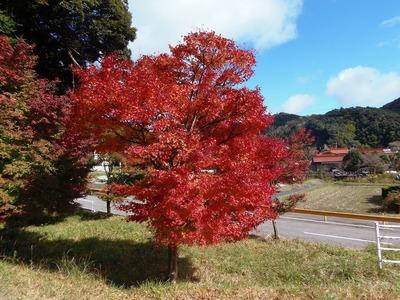 須賀社の秋色3.jpg