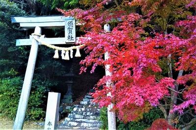 須賀社の紅葉1.jpg