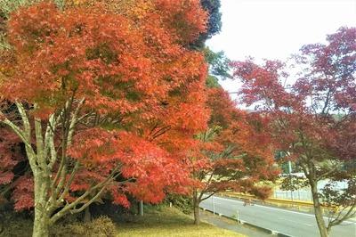 須賀社の紅葉3.jpg