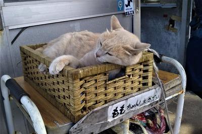 餌代を稼ぐ猫ももちゃん.jpg