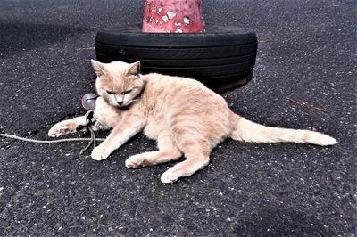 餌代を稼ぐ猫ももちゃん9.25.jpg
