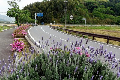 香月ロードと季節の花.jpg