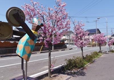 香月ロードの陽光桜2.jpg