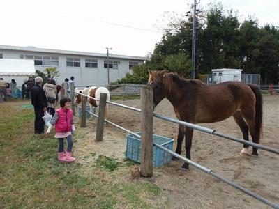 馬との触れ合い1.jpg