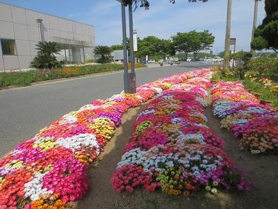 駐車場と花壇.jpg
