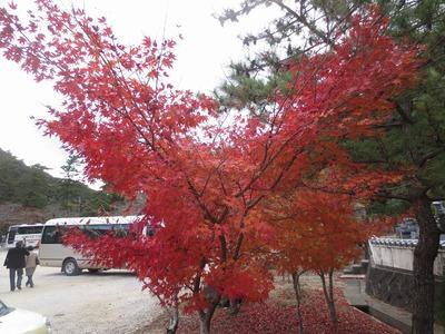 駐車場の紅葉.jpg