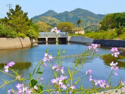 高山と寺山と青海湖水門.jpg