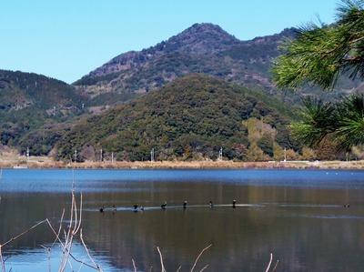 高山と青海湖と鴨.jpg
