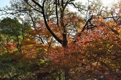 高山の秋色1.jpg
