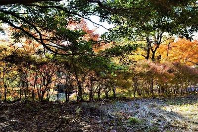 高山の秋色2.jpg