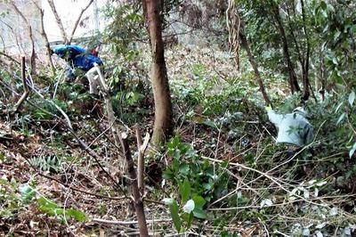 高山オートキャンプ場入口の抜き伐り1.jpg