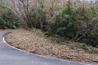 高山オートキャンプ場入口東側の抜き伐り後.jpg