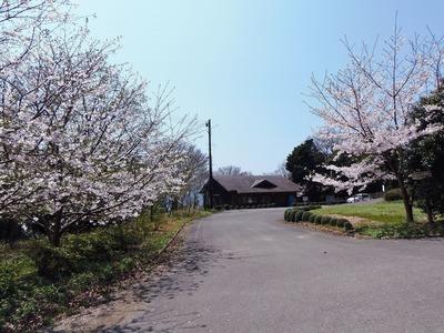 高山オートキャンプ場管理棟と桜.jpg