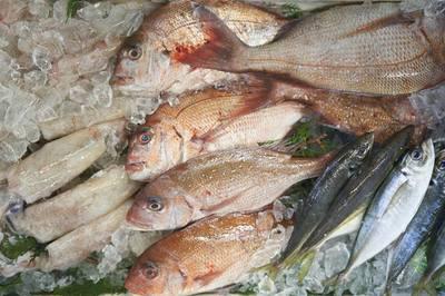 魚さばき.jpg