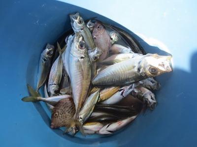 魚釣り体験の釣果1.jpg