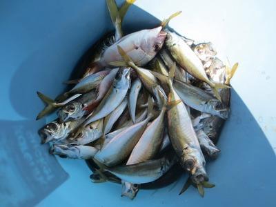 魚釣り体験の釣果2.jpg
