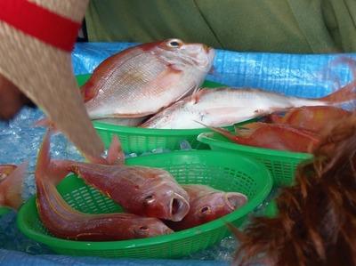 鮮魚販売3.jpg