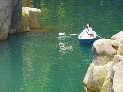 鴨とボート.jpg