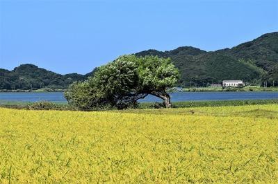 黄金色と気になる木.jpg