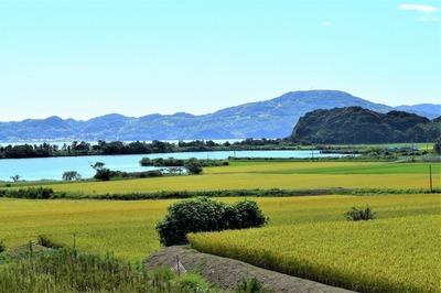 黄金色の田んぼ・青海湖・波の橋立.jpg