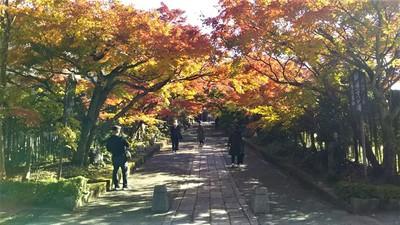 龍福寺参道の紅葉3.jpg