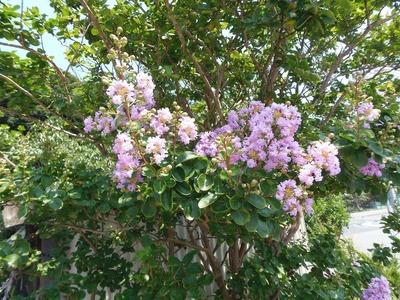 1班岩本さんの季節の花.jpg