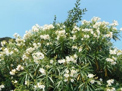5班岩本さんの季節の花.jpg